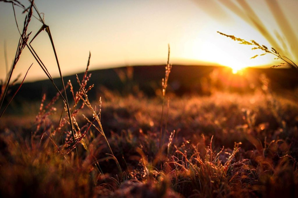 Canva - Selective Focus Photography of Grasses during Golden Hour 1024 x 682